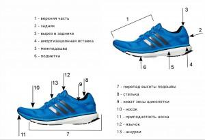 Анатомия беговых кроссовок